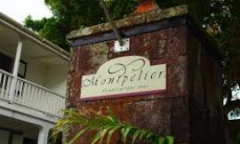 Montpelier Plantation Inn Wins Nevis Food and Mango Festival Cook-Off