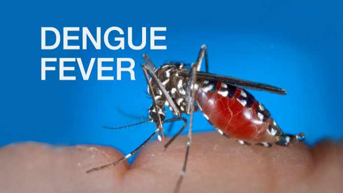 SKN's populace encouraged to take precaution to protect themselves against Dengue Fever