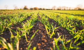Can farmers be expected to have their Farms insured in the Future?