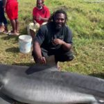 Second Shark captured from SKN's waters in a week