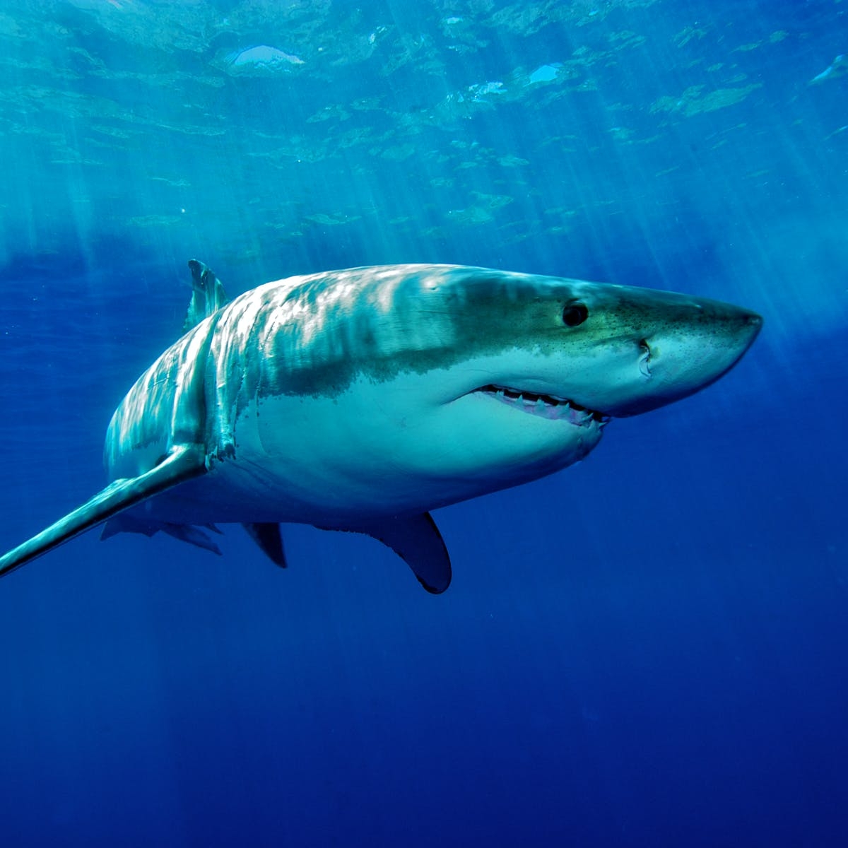 Sharks proximity and volcanic activity pending confirmation